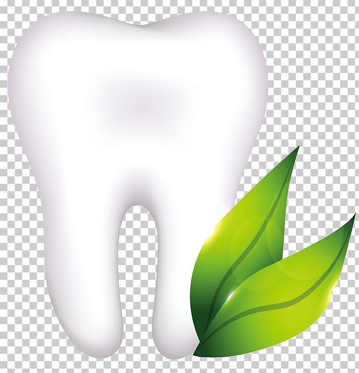 Human Tooth Dentistry Dental Implant Dental Anatomy PNG.
