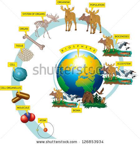 Hierarchy Biological Organization Stock Vector 126853934.