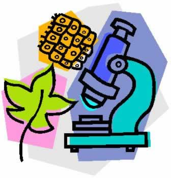 Free Biology Pictures, Download Free Clip Art, Free Clip Art.