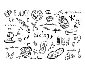 1051 Biology free clipart.