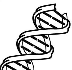 Free Biology Clipart Black And White, Download Free Clip Art.