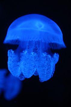 Free vector jellyfish clip art glowing in the dark deep water.