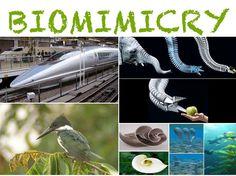 55 Best Biomimicry images.