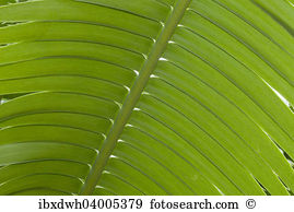 Cycad Images and Stock Photos. 1,465 cycad photography and royalty.