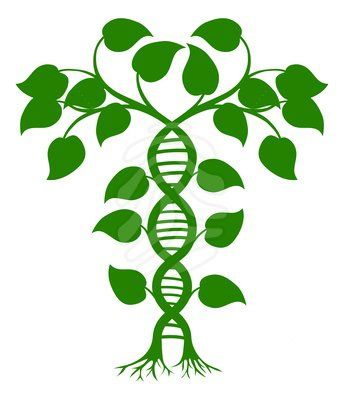 DNA nature plant.
