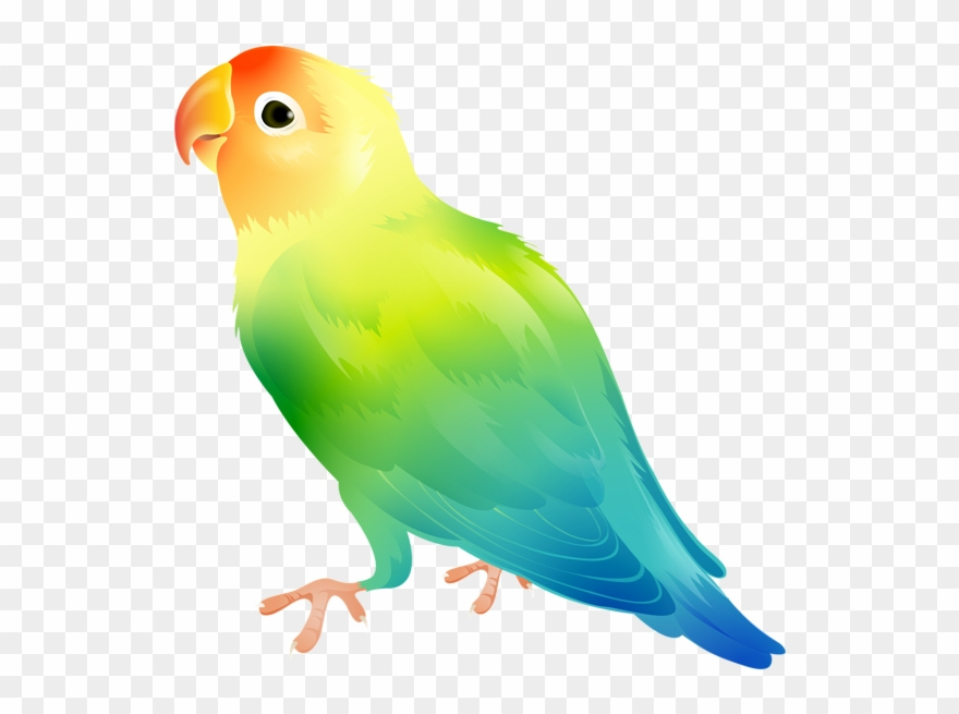 Parrot Bird Png Clip Art Image Transparent Png (#231041.