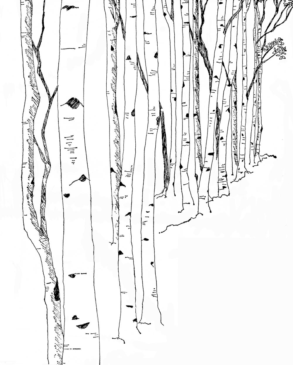 Birch Tree Clipart.