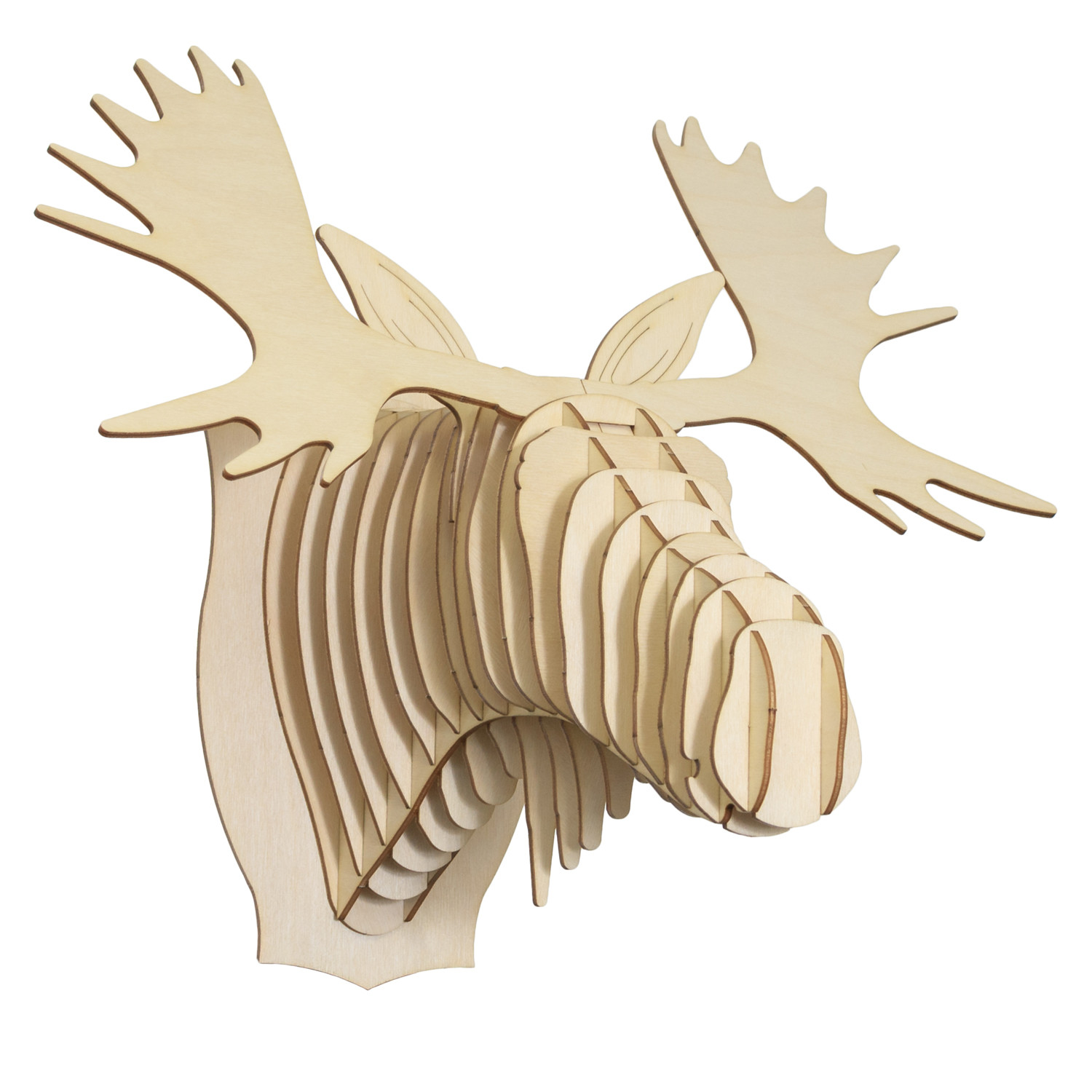 Fred // Birch Wood Moose Head (Medium).