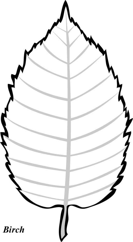 Birch Tree Leaf Template ….