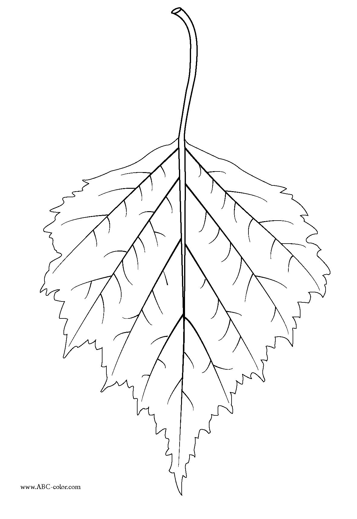 Birch leaf clipart - Clipground