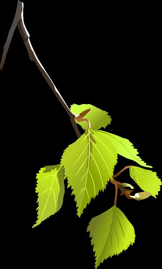 Birch leaf silhouette SVG Vector file, vector clip art svg file.