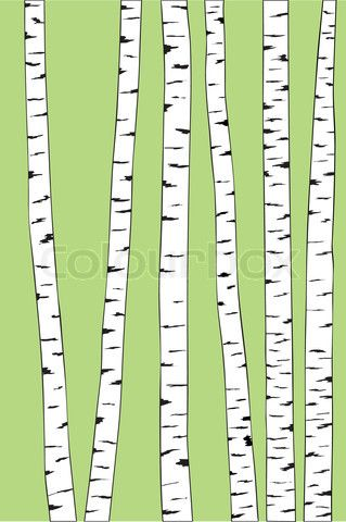 Vector of 'birch trunk trees background. Vector illustration' on.