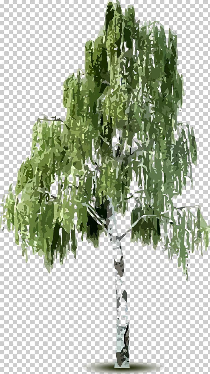 Birch Tree Desktop PNG, Clipart, Art Car, Birch, Birch Family, Birch.
