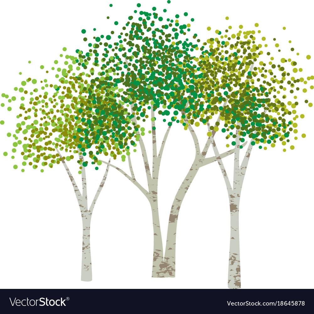 Hand drawn aspen birch trees.