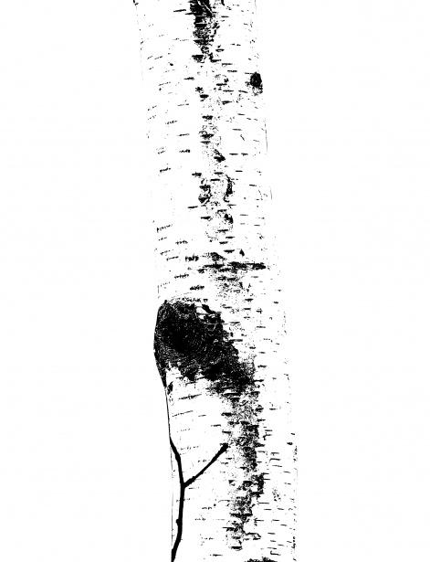 Tree Trunk Clipart Free Stock Photo.
