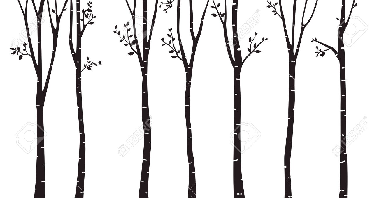 Birch Tree Silhouette Vector.