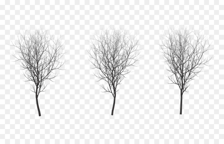 Birch Tree clipart.