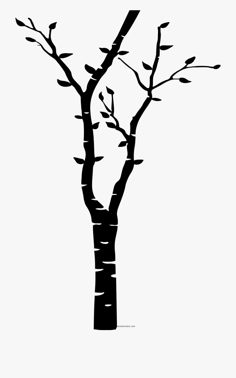 Birch Branch Png.