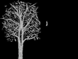 White birch tree clipart.
