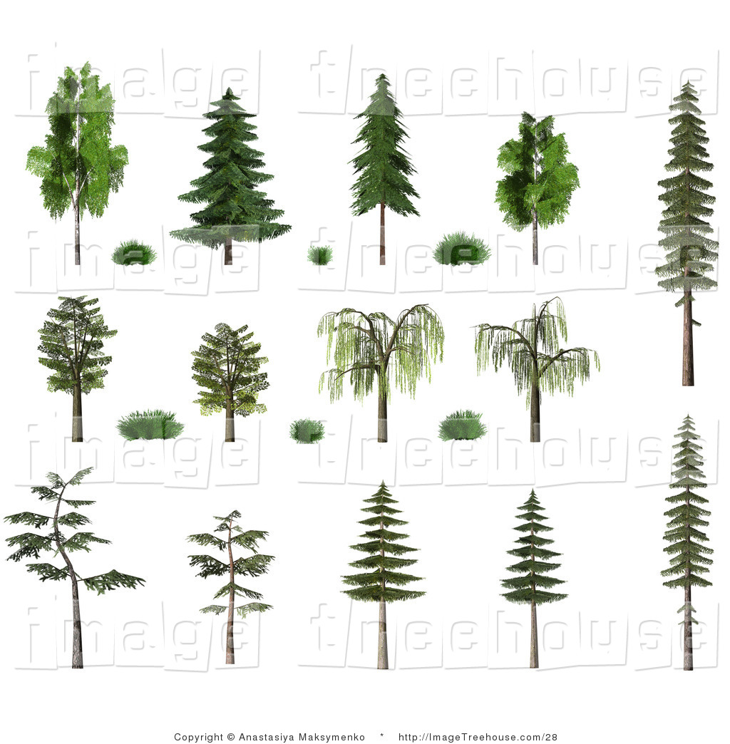 Clipart of a 3d Collection of Trees and Shrubs, Including Birch.