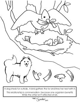 Bird nest and dog fur commensalism coloring page.