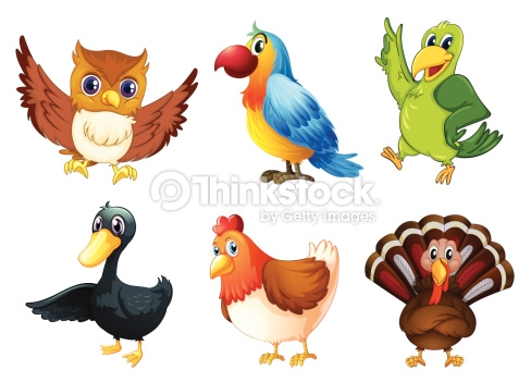 Six Different Species Of Birds Vector Art.