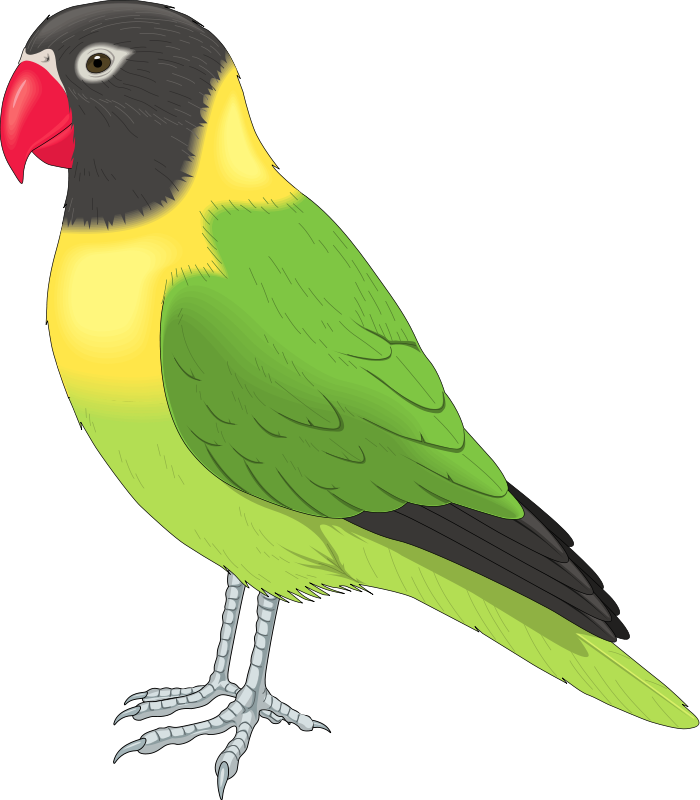Clip art pictures of animals and birds.