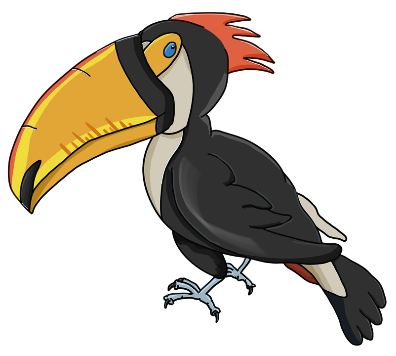 Toucan Perseid Bird.