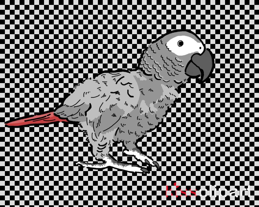 bird beak parrot parakeet animal figuretransparent png image.