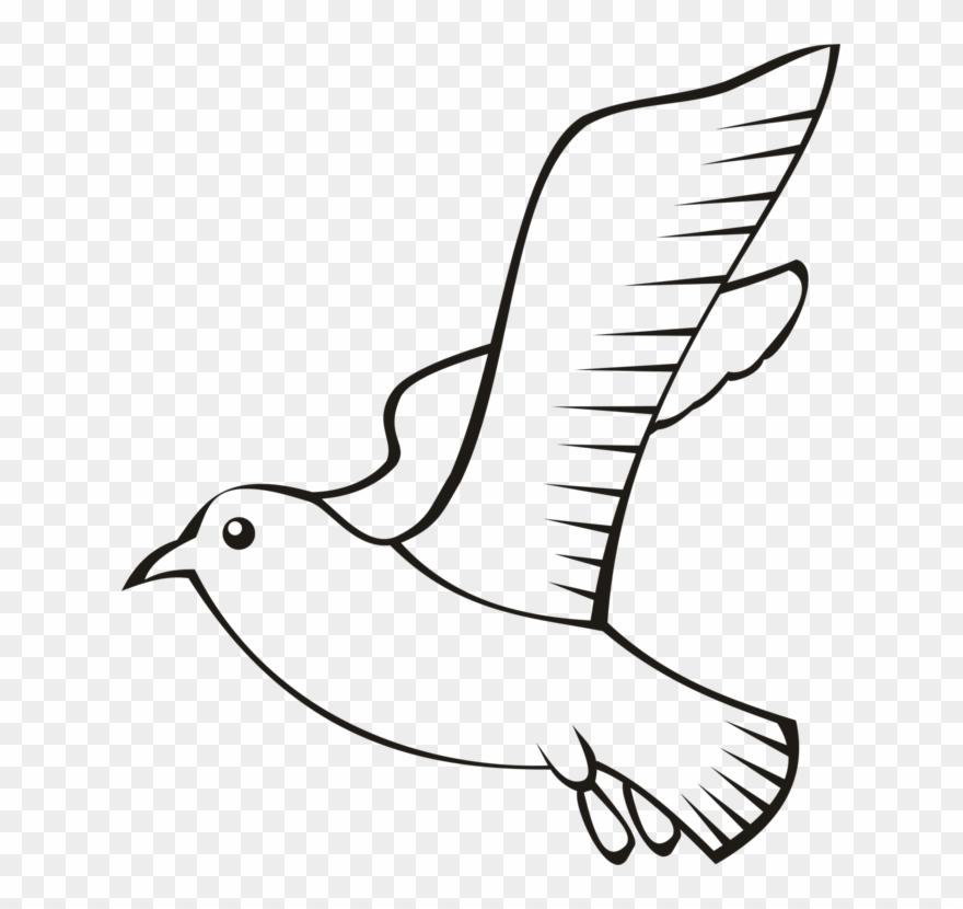 Feather Bird Beak Wing Flight.