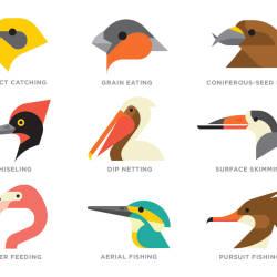 Collections :: Identifying Bird Beak Types through Robert Ridgway's.
