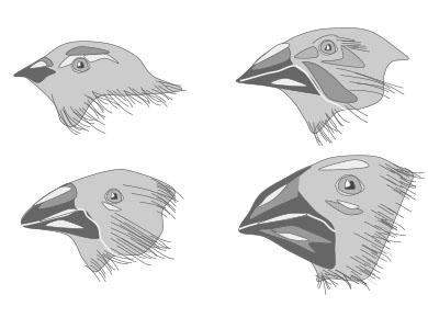 A New Beak Evolution Lab!.