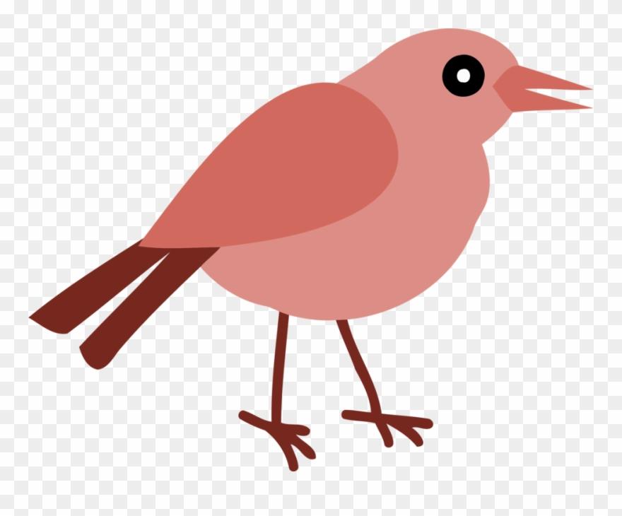 European Robin Bird Beak Thumbnail Perching.