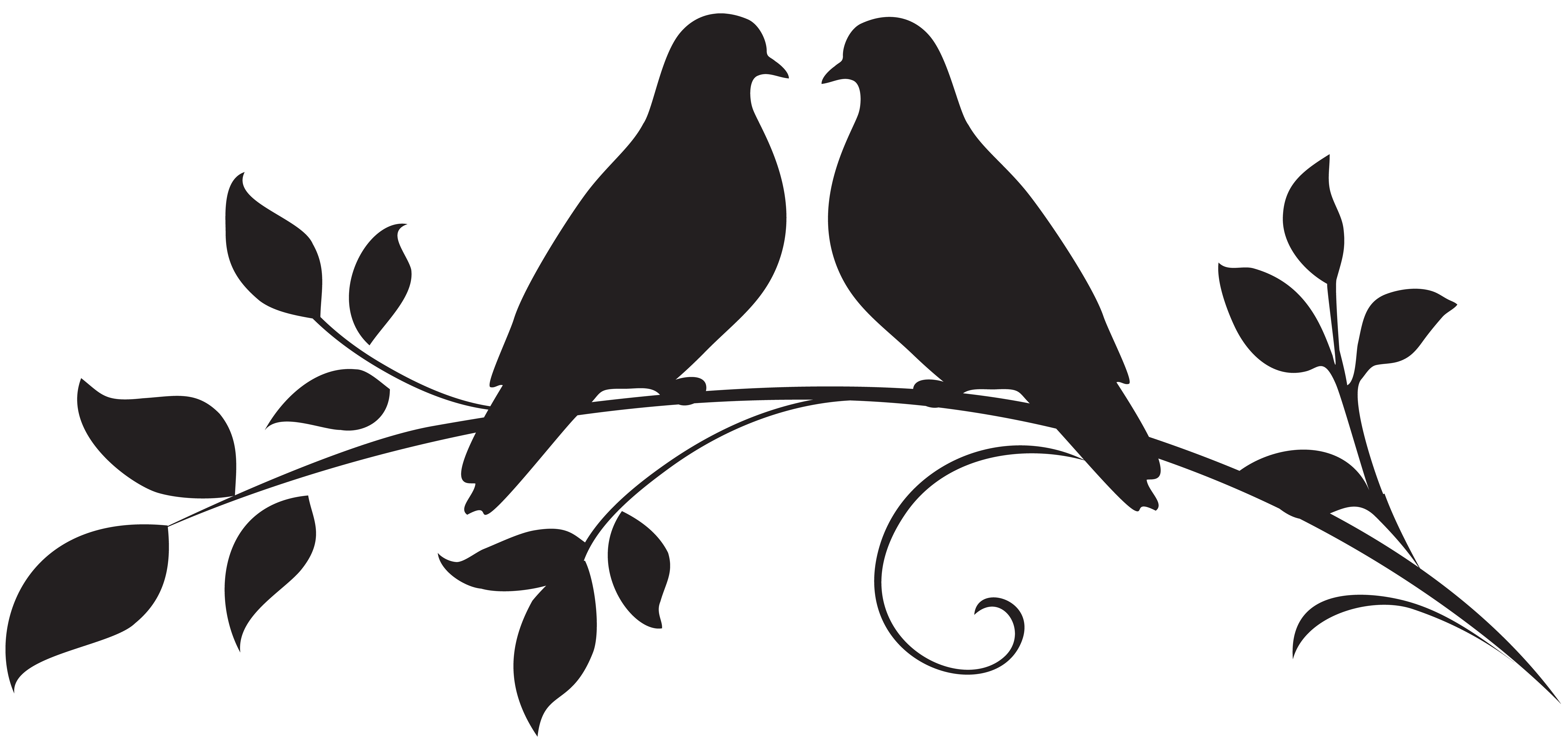 Bird Drawing Illustration.