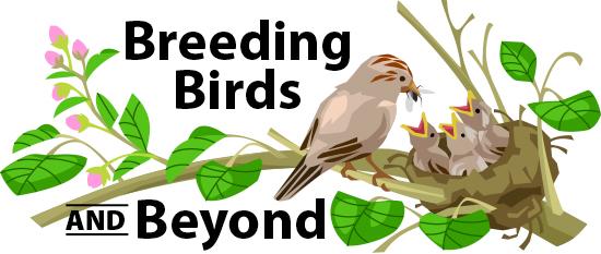 Desert ornithologist.