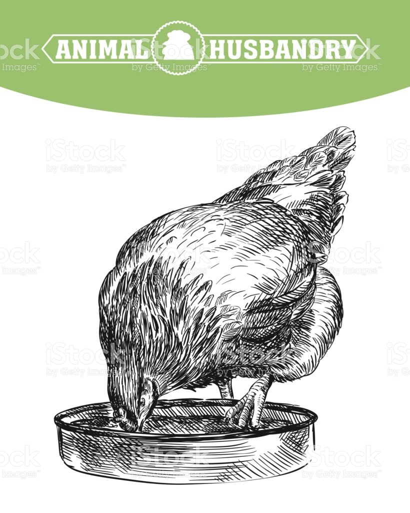Chicken Breeding Animal Husbandry Livestock stock vector art.