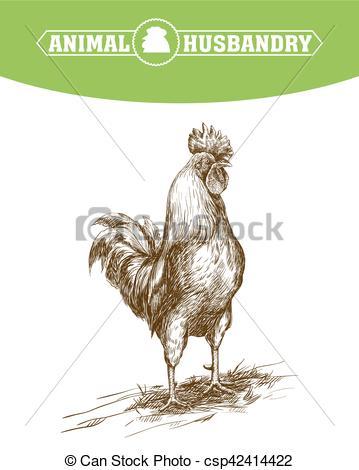 Vector Illustration of chicken breeding. animal husbandry.