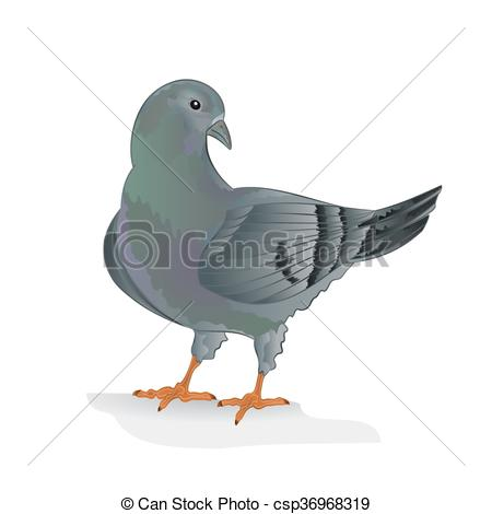 Vector Clip Art of Carrier pigeon breeding vector.eps.