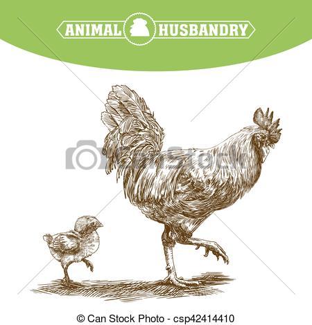 Vector Clip Art of chicken breeding. animal husbandry. livestock.