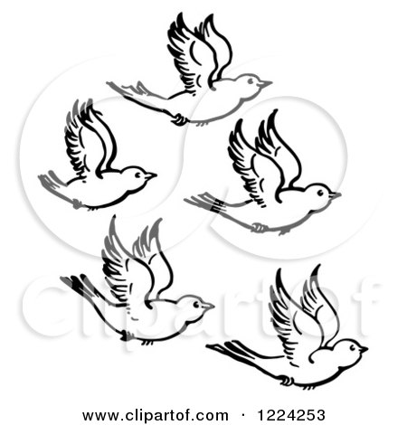 Clipart of Black and White Five Flying Birds.