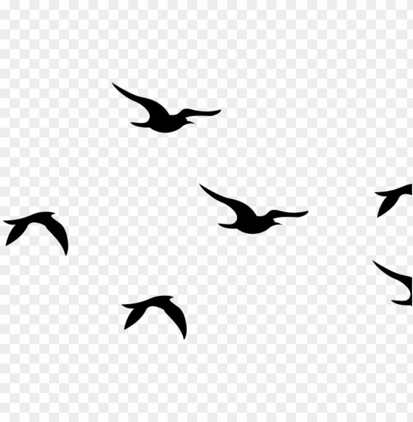 flying bird clipart bird png.