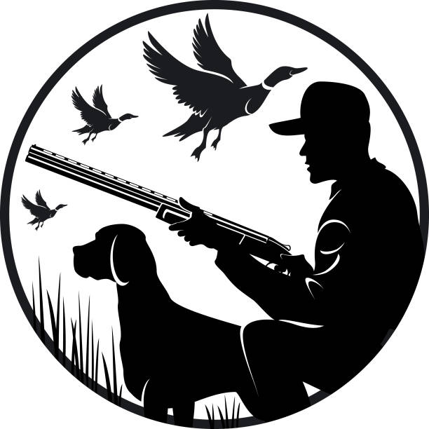 Duck Hunting Dog Illustrations, Royalty.