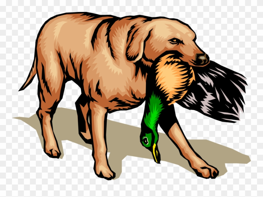 Vector Illustration Of Golden Lab Retriever Hunting.