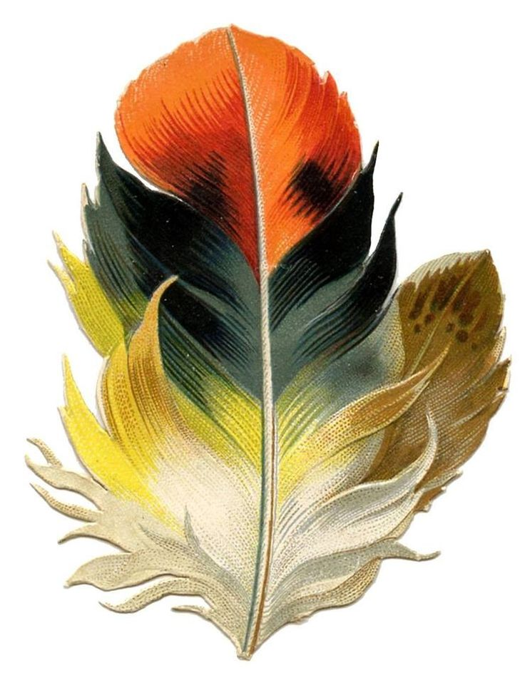 1000+ images about feathers on Pinterest.