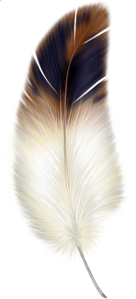 Bird feathers clipart.