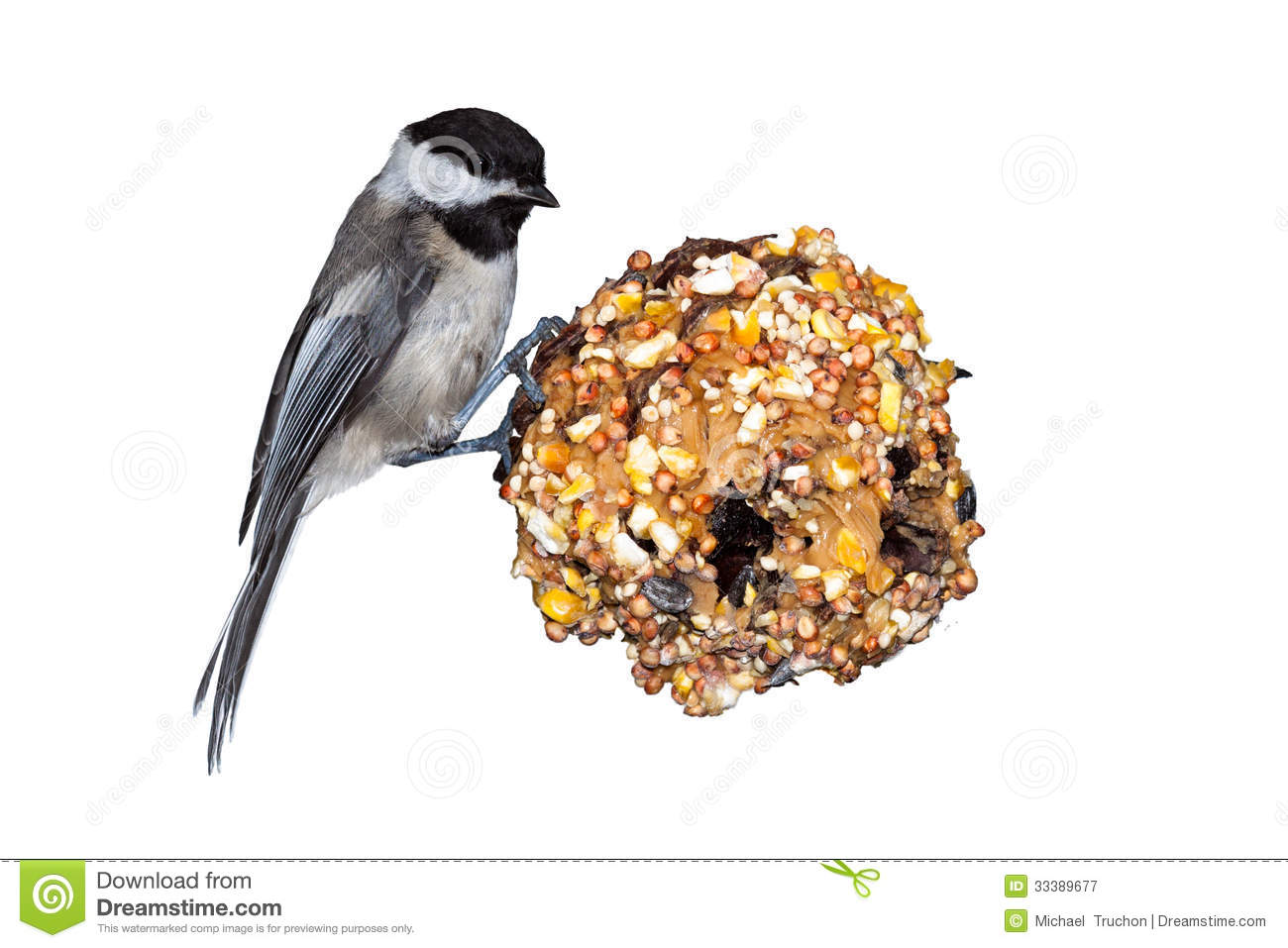 Chickadee, Pine Cone & Peanut Butter Royalty Free Stock.