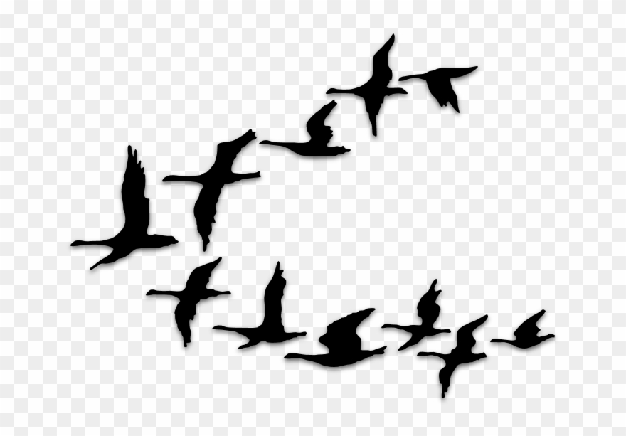 Birds Silhouettes Art & Islamic Graphics.