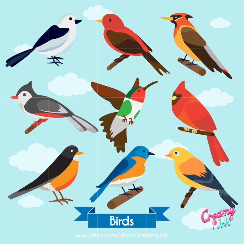 Birds digital clip art featuring different colours and types.