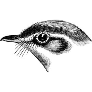 Bird Head Clipart.
