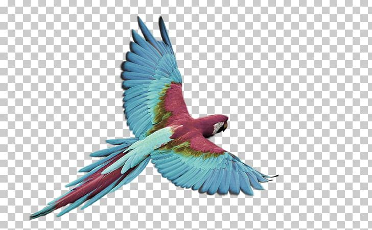 Bird Flight Parrot Macaw White PNG, Clipart, Aida Cloth.